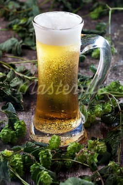 beer in a glass and hop Stock Photo - Royalty-Free, Artist: bernjuer                      , Code: 400-05375118