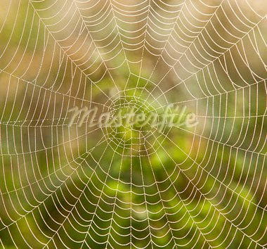 closeup of spider web with dew drops in the morning Stock Photo - Royalty-Free, Artist: courtyardpix                  , Code: 400-05383221