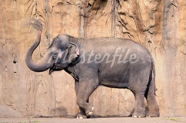Asian elephant spraying soil over its body to stay cool, motion blur on trunk Stock Photo - Royalty-Free, Artist: neelsky                       , Code: 400-05386277