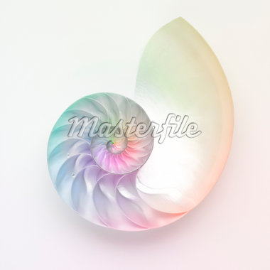 Nautilus shell Stock Photo - Premium Royalty-Freenull, Code: 6106-05437705