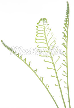 Leaves Stock Photo - Premium Royalty-Freenull, Code: 6106-05495127