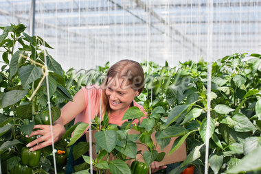 Woman examining plants in greenhouse Stock Photo - Premium Royalty-Freenull, Code: 635-05550690