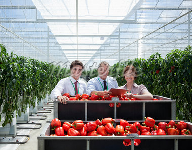 Workers in greenhouse standing with produce Stock Photo - Premium Royalty-Freenull, Code: 635-05550758