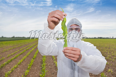Scientist in protective gear examining plant in field Stock Photo - Premium Royalty-Freenull, Code: 635-05550795