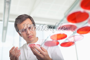Scientist examining petri dishes in lab Stock Photo - Premium Royalty-Freenull, Code: 635-05550846