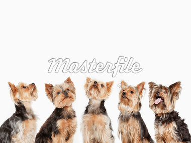 Identical dogs sitting together Stock Photo - Premium Royalty-Freenull, Code: 635-05551116