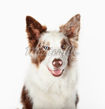 Close up of dog's face Stock Photo - Premium Royalty-Freenull, Code: 635-05551139
