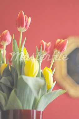 Bunch of flowers with tulips Stock Photo - Premium Royalty-Freenull, Code: 689-05610663