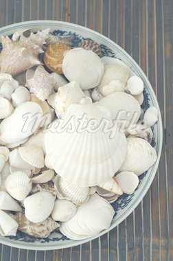 Decorative seashells Stock Photo - Premium Royalty-Freenull, Code: 689-05611417