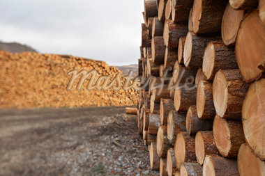 Piles of Logs, Scotland Stock Photo - Premium Royalty-Free, Artist: Michael Mahovlich, Code: 600-05641778