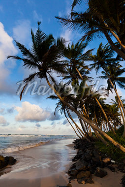 Beach and Palm Trees, Ahangama, Sri Lanka Stock Photo - Premium Rights-Managed, Artist: R. Ian Lloyd, Code: 700-05642146