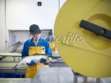 Worker in fish processing plant Stock Photo - Premium Royalty-Freenull, Code: 649-05649458