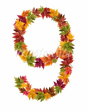 Alphabet and numbers made from autumn maple tree leaves. Stock Photo - Royalty-Free, Artist: DJM_Photo                     , Code: 400-05669503