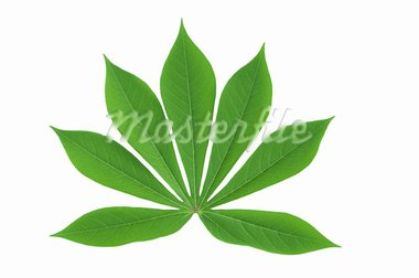 Leaves texture Stock Photo - Royalty-Free, Artist: supakitmod                    , Code: 400-05670576