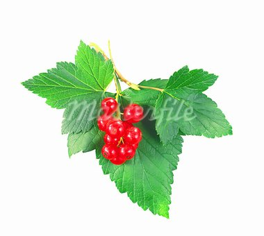 fresh currant with green leaves isolated on white Stock Photo - Royalty-Free, Artist: tetkoren                      , Code: 400-05673902