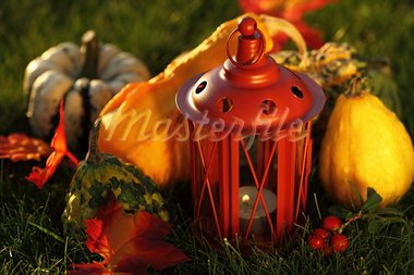 Still life of pumpkins for Thanksgiving Stock Photo - Royalty-Free, Artist: Brebca                        , Code: 400-05674568