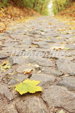 Yellow sheet lies on the road from the stone Stock Photo - Royalty-Free, Artist: Mallivan                      , Code: 400-05681335