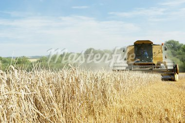 Combine Harvester Working In Field Stock Photo - Royalty-Free, Artist: MonkeyBusinessImages          , Code: 400-05686339