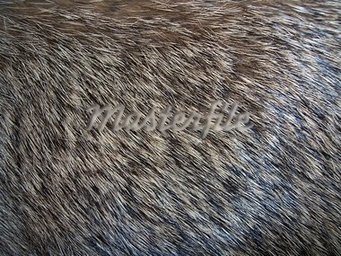 Close up photo of Fur Stock Photo - Royalty-Free, Artist: darrenwhi                     , Code: 400-05688041