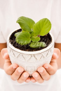 close up shot child's hands holding young plant in a bud Stock Photo - Royalty-Free, Artist: vkraskouski                   , Code: 400-05689801