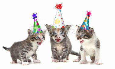 Singing Kittens on a White Background With Birthday Hats Stock Photo - Royalty-Free, Artist: tobkatina                     , Code: 400-05693301