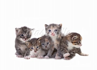 Adorable Cute Kittens on White Background Stock Photo - Royalty-Free, Artist: tobkatina                     , Code: 400-05693347