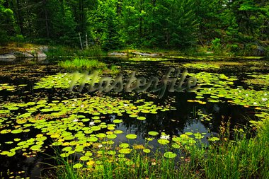 Lily pads and water lilies on lake surface in Northern Ontario wilderness Stock Photo - Royalty-Free, Artist: Elenathewise                  , Code: 400-05695756