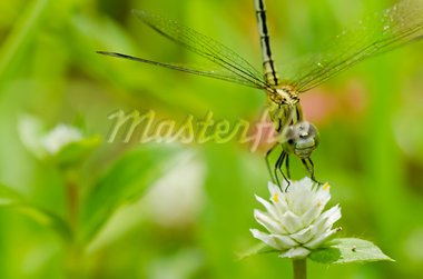 dragonfly in garden or in green nature Stock Photo - Royalty-Free, Artist: SweetCrisis                   , Code: 400-05700999