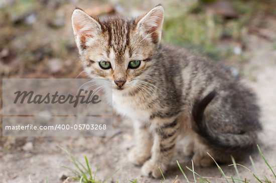 Little one month kitten sitting at pathway Stock Photo - Royalty-Free, Artist: nndemidchick                  , Code: 400-05703268