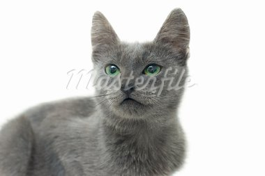 Grey kitten with green eyes Stock Photo - Royalty-Free, Artist: nndemidchick                  , Code: 400-05703269