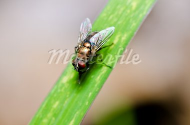 fly in green nature or in the city Stock Photo - Royalty-Free, Artist: SweetCrisis                   , Code: 400-05714349