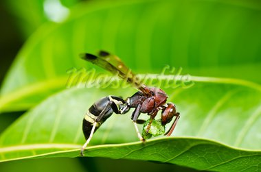 wasp in green nature or in garden. It's danger. Stock Photo - Royalty-Free, Artist: SweetCrisis                   , Code: 400-05714353
