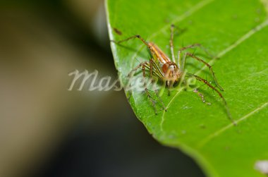 long legs spider in green nature or the garden Stock Photo - Royalty-Free, Artist: SweetCrisis                   , Code: 400-05714407