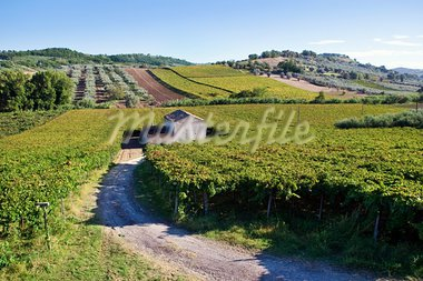 Small farmhouse in the middle of vineyards in Arbruzzo, Italy Stock Photo - Royalty-Free, Artist: Dinga                         , Code: 400-05721683
