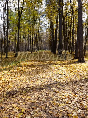 Walking in autumn city park Stock Photo - Royalty-Free, Artist: inhabitant                    , Code: 400-05723010