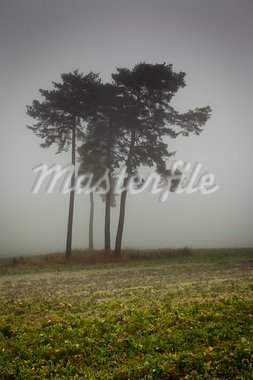 An image of a nice trees with fog in bavaria germany Stock Photo - Royalty-Free, Artist: magann                        , Code: 400-05724385