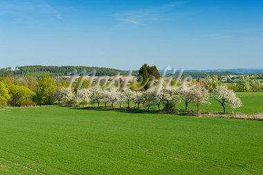 Beautiful spring landscape with green field and blooming trees Stock Photo - Royalty-Free, Artist: Fyletto                       , Code: 400-05725663