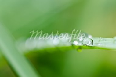 fresh water drops in green nature or in forest Stock Photo - Royalty-Free, Artist: SweetCrisis                   , Code: 400-05727760
