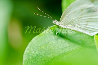 butterfly in green nature or in the garden Stock Photo - Royalty-Free, Artist: SweetCrisis                   , Code: 400-05727790
