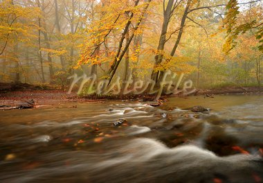 Autumn in the woods with a creek running through the woods one day with haze Stock Photo - Royalty-Free, Artist: ckkeller                      , Code: 400-05728159