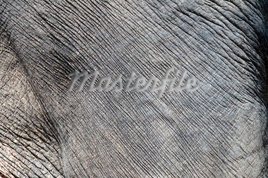 Closeup on the dusty gray elephant skin Stock Photo - Royalty-Free, Artist: nazzu                         , Code: 400-05730558