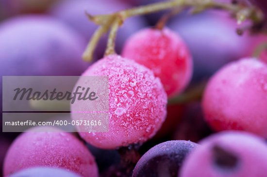 Macro view of frozen berries: blackcurrant, redcurrant, blueberry Stock Photo - Royalty-Free, Artist: AGorohov                      , Code: 400-05731616