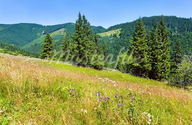 Summer mountain landscape with flowering grassland in front Stock Photo - Royalty-Free, Artist: Yuriy                         , Code: 400-05737752