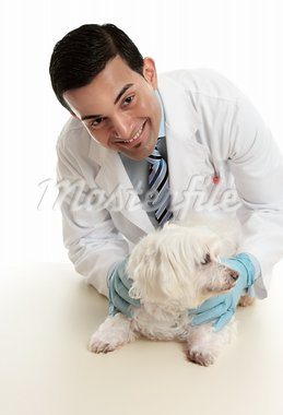 A male vet taking care of or attending to a small pet dog.   He is looking up with a friendly smile. Stock Photo - Royalty-Free, Artist: lovleah                       , Code: 400-05738224