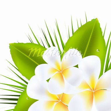 3 Beautiful Frangipani, Isolated On White Background, Vector Illustration   Stock Photo - Royalty-Free, Artist: barbaliss                     , Code: 400-05739416