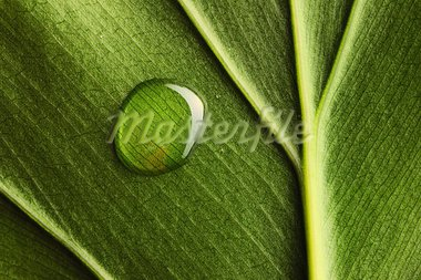 Beautiful water drop on a leaf close-up Stock Photo - Royalty-Free, Artist: haveseen                      , Code: 400-05744560