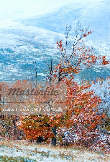 October Carpathian mountain Borghava plateau with first winter snow and autumn colorful foliage Stock Photo - Royalty-Free, Artist: Yuriy                         , Code: 400-05745589