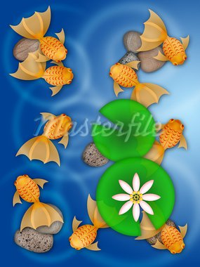 Fancy Goldfish Swimming in Pond with Lily Pad Flower and Pebbles Illustration Stock Photo - Royalty-Free, Artist: jpldesigns                    , Code: 400-05748508