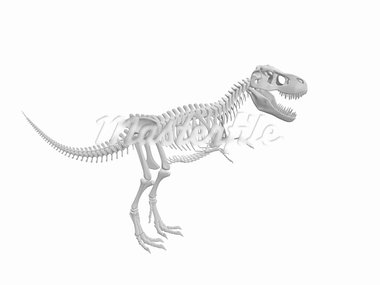 white tyrannosaurus Dinosaur skeleton isolated on white background Stock Photo - Royalty-Free, Artist: sgame                         , Code: 400-05748523