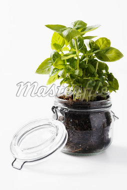 Basil Plant in Glass Jar Stock Photo - Premium Royalty-Free, Artist: John Cullen, Code: 600-05762141